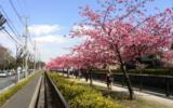 春の訪れ…。